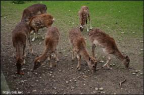 鹿(Hirschgarten)