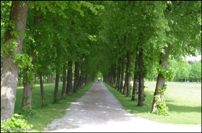 Hofgarten 横の道