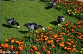 花を食べる鳥たち