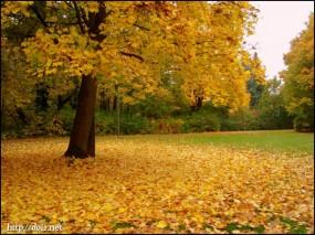 10月末頃、紅葉