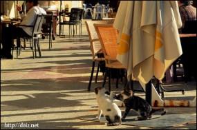 ゴゾ島の猫